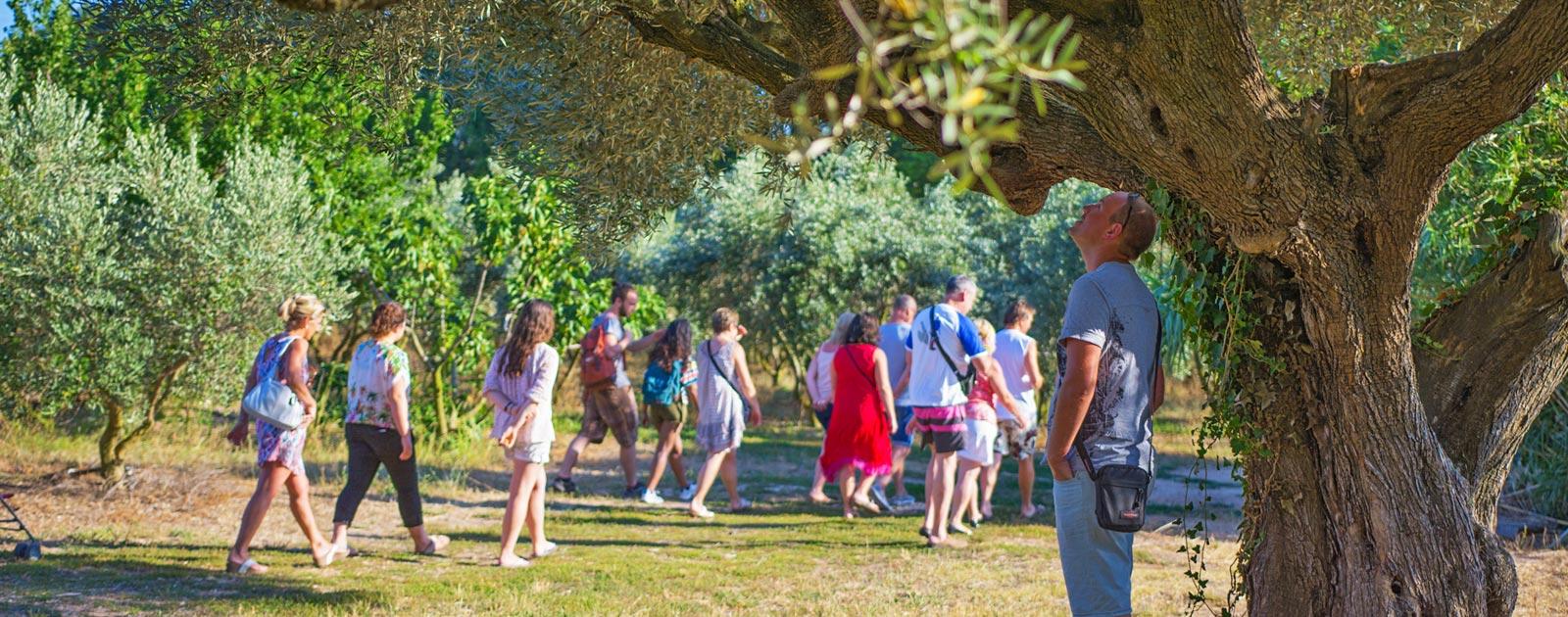Découvrez les trésors du parc de Port Cros grâce au camping Lou Pantaï
