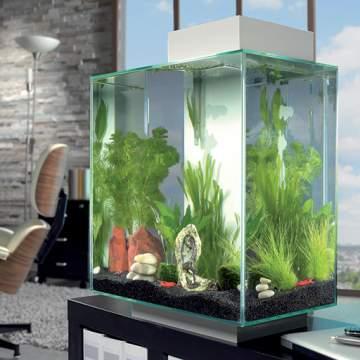 Mon premier aquarium : conseils utiles